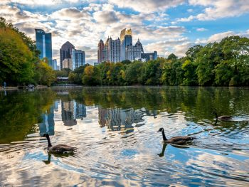 the lake a piedmont park in Atlanta with ducks
