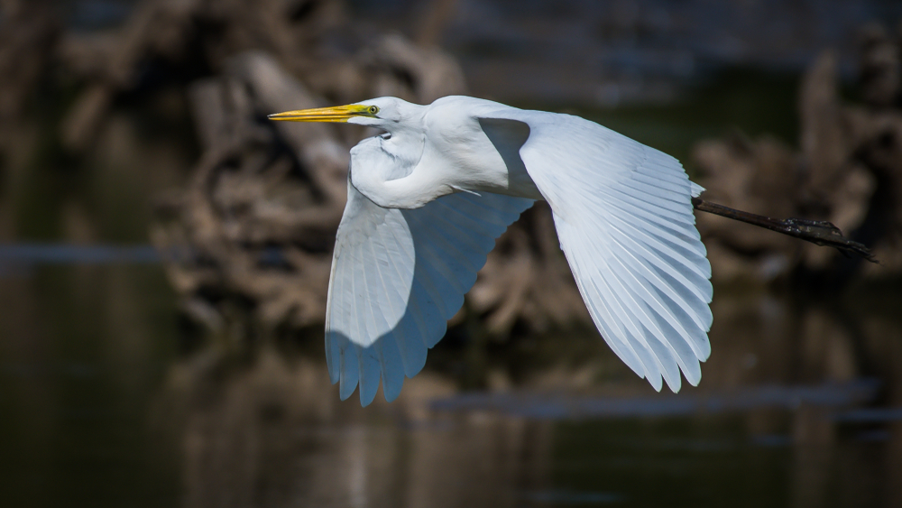 Virginia is a great place to go birding.
