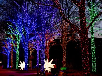 A picture of trees that are decorated in many different color Christmas lights along with bright white star decorations along a sidewalk during Christmas in Georgia.