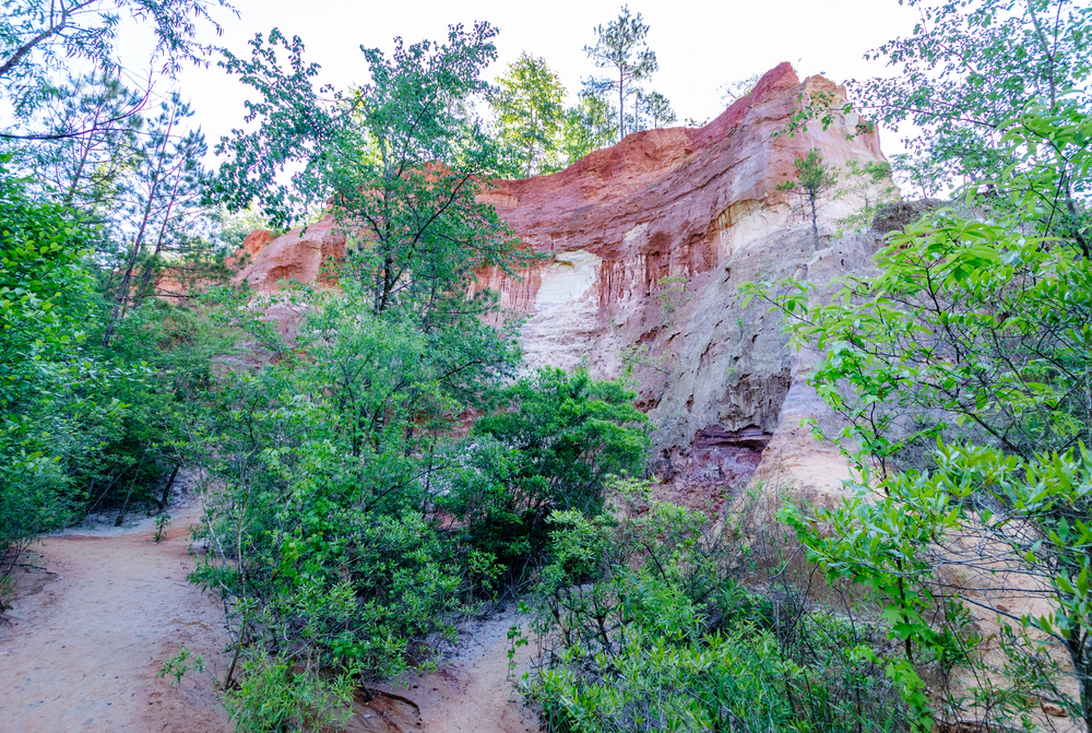 a creek bed, trees and red clay rocks in Georgia.