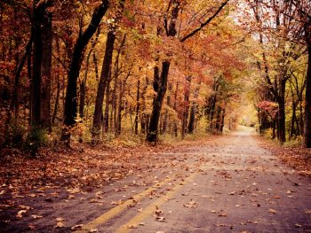 A picture of a road in Arkansas covered in fallen leaves from the tunnel of yellow and orange trees in the autumn.