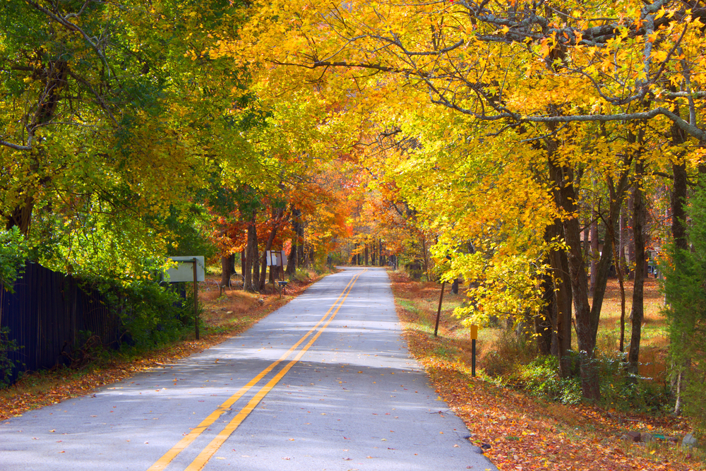 A picture of a tunnel of yellow, orange and red trees on Highway 272 through Rich Mountain during fall in Arkansas.