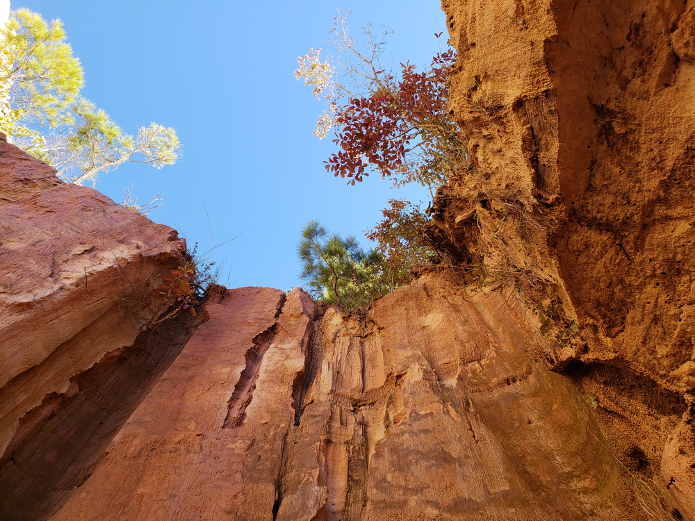 Sky and trees from canyon floor.