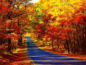 Fall foliage flanking Skyline Drive in Virginia
