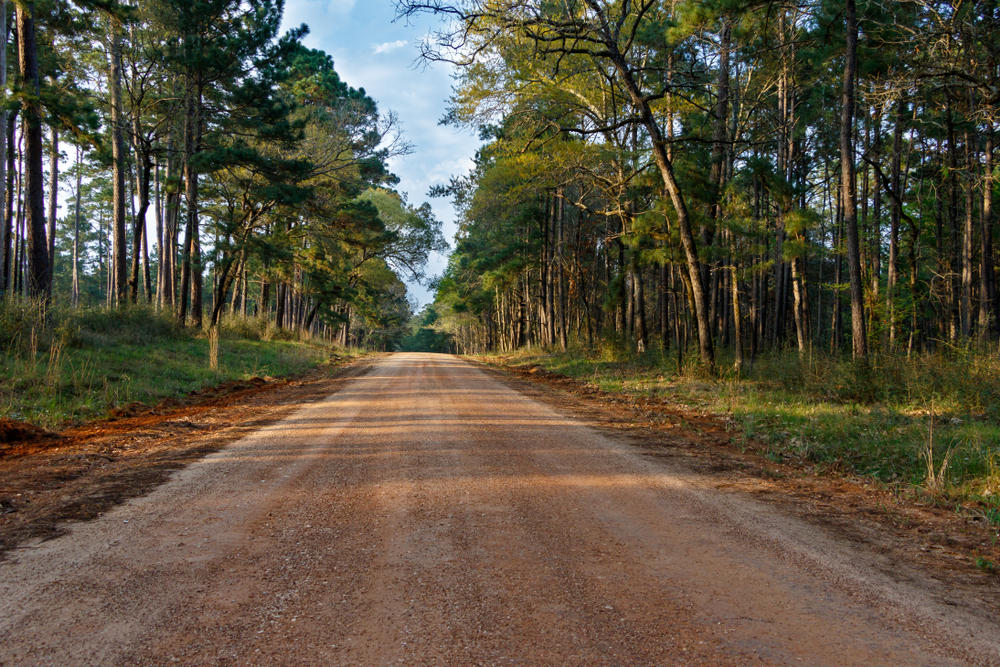 A small road leads between two portions of Sam Houston National Forest, one of the things to do in Conroe.
