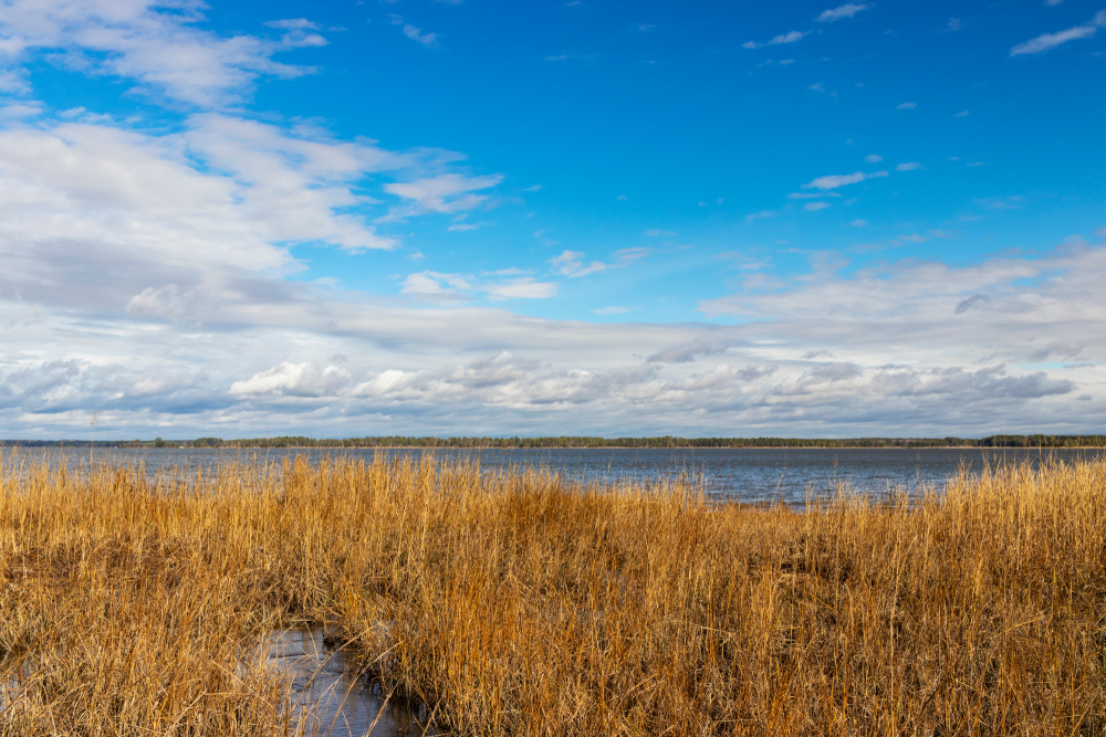 York River State Park is a great nature  escape.