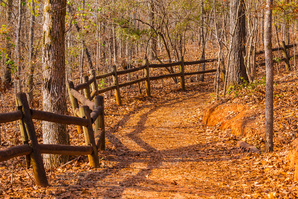 trail into the canyon at Providence Canyon State Park.