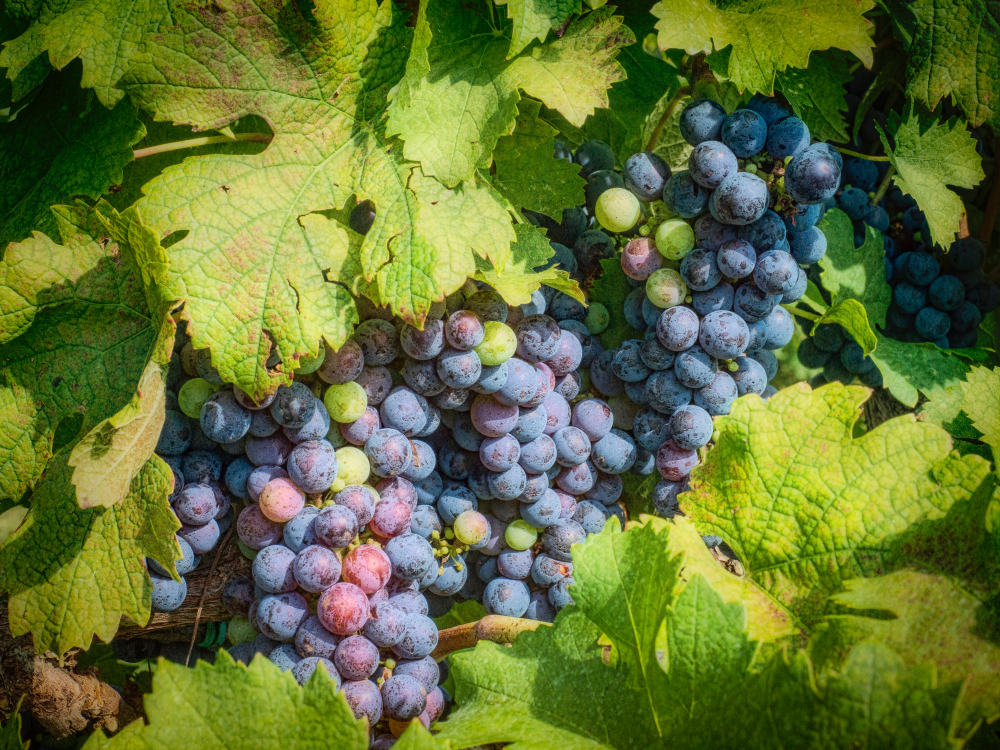 Find some wineries on a road trip in Virginia.