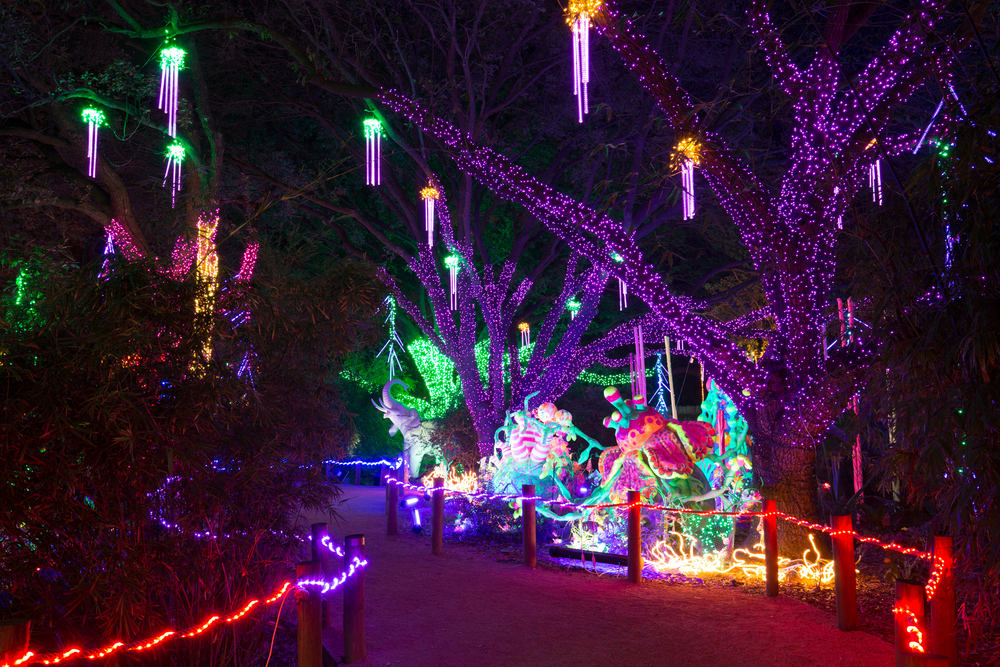 A photo from the Houston Zoo decorated in colorful lights. Glowing displays of jellyfish hanging from trees light up a path.