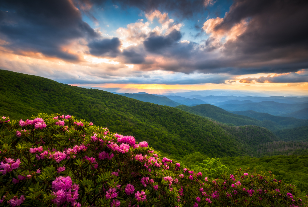 Pink flowers on a shrub and then a view of the mountains covered in green trees. The sun is setting so the sky is blue, yellow, and orange. It is also cloudy.