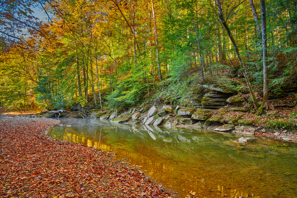fallen leaves on the ground by a beautiful creek. A wall of rocks and trees behind the creek