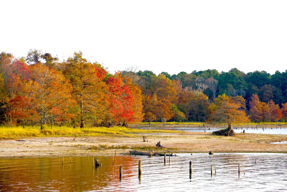 Beautiful fall colors over a lake in Louisianan