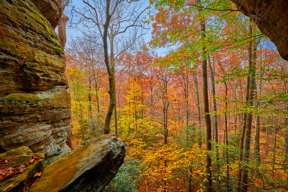 view from crack in the rocks hiking trail, wooded area of a variety different colored leaves