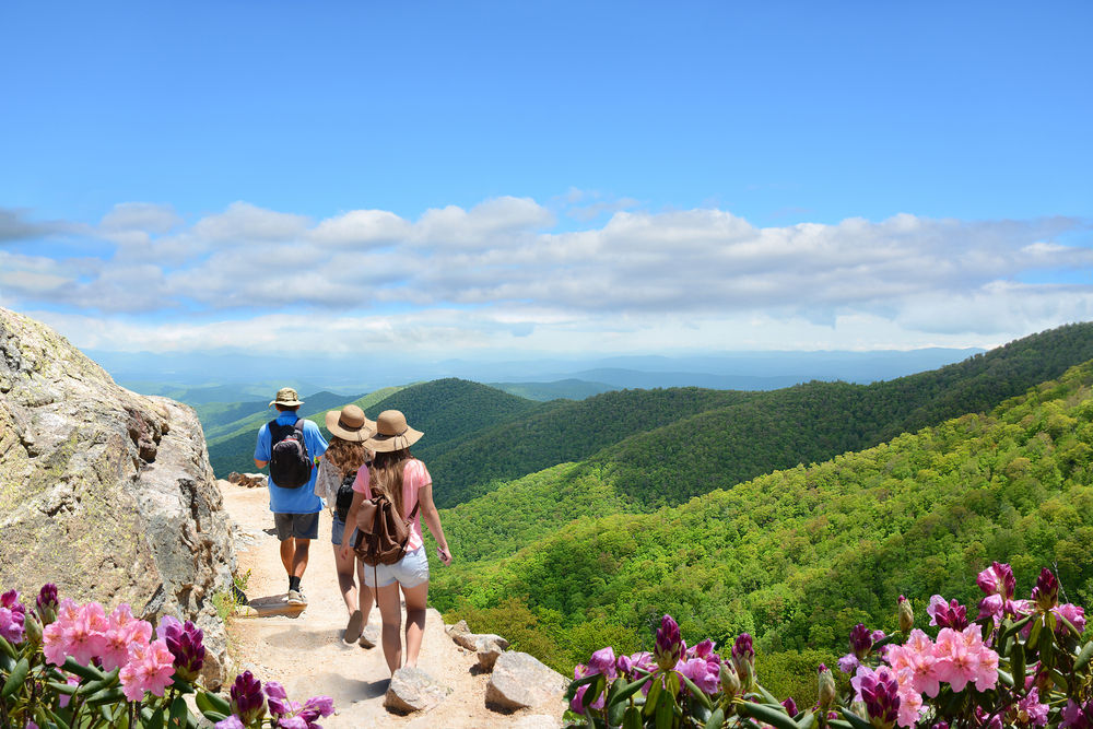 Three people, a man and two women, walking on a trail on the side of a mountain. They are all wearing wide brimmed hats and backpacks. You can see pink and purple flowers and the mountains covered in green trees.