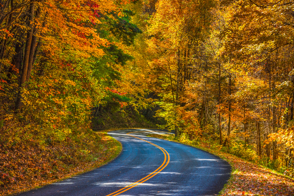 A winding road in Pisgah National Forest, one of the best things to do in Asheville. It is surrounded on both sides by a dense forest. It is fall so the leaves are yellow, orange, and red. There are dead leaves on the ground.
