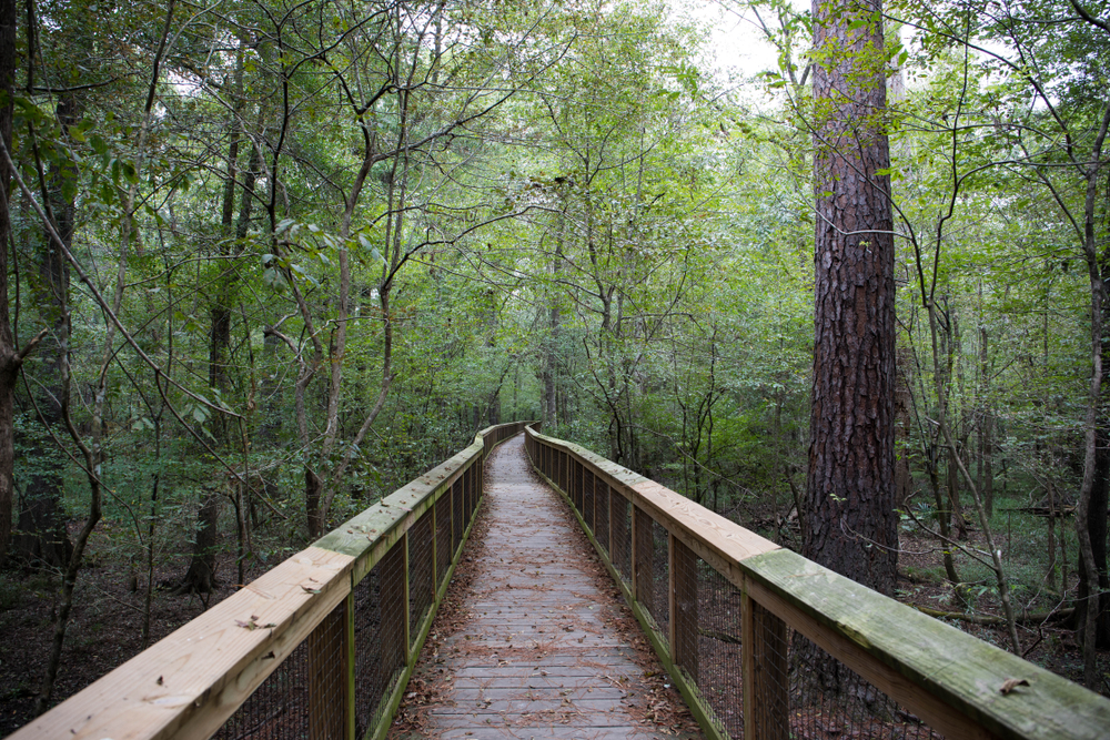 A hiking trail in Congaree National Park