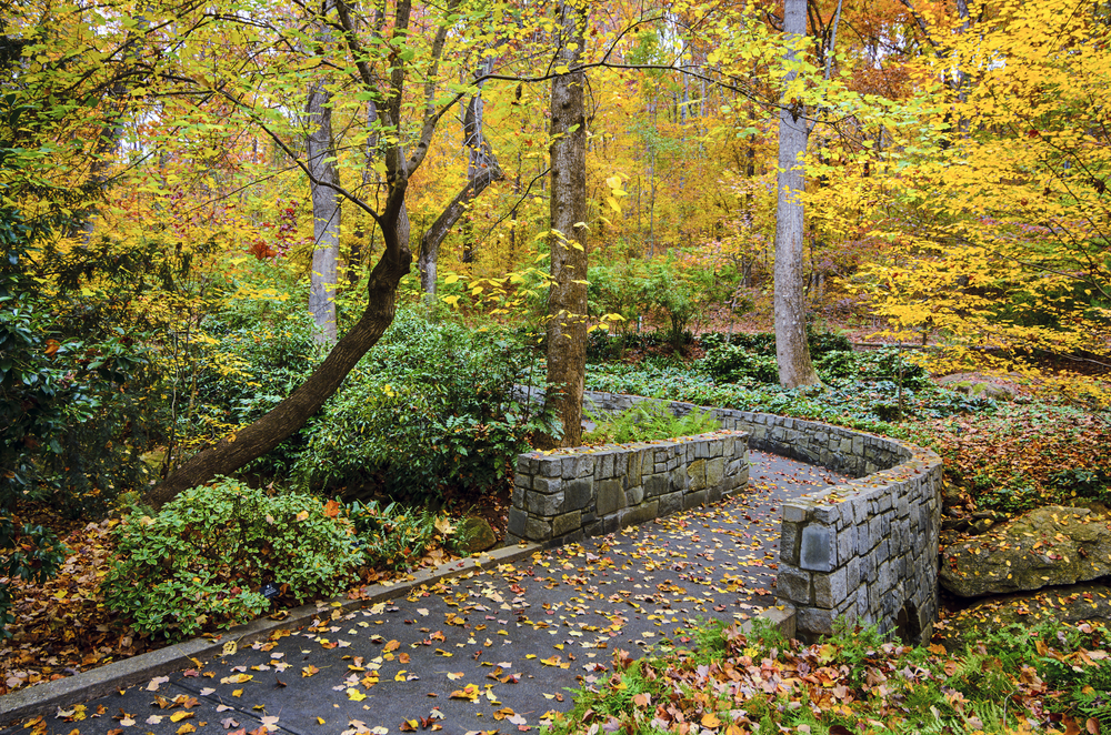 path with wooden sides, surrounded by fall foliage