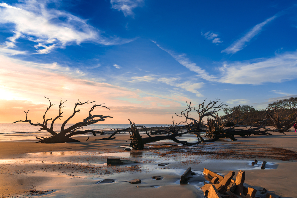 beach covered by driftwood trees at sunrise