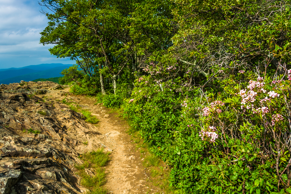 A picture of part of the Appalachian Trail that has rocky terrain on the left and flowers and foliage to the right.