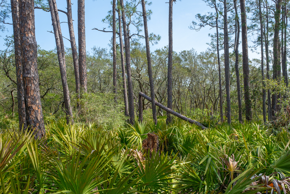Visiting Bon Secour National Wildlife Refuge is one of the best things to do in Orange Beach for birders.