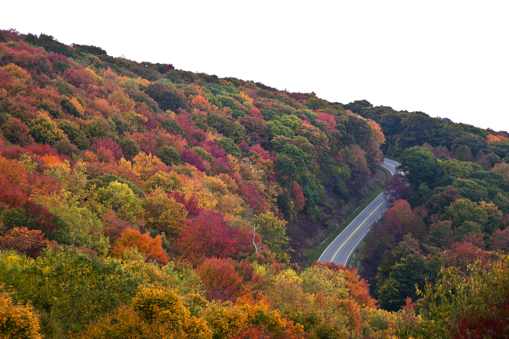 Photo of a road curving around a mountain on the Cherohala Skyway with red, orange, yellow, and maroon fall foliage surrounding it