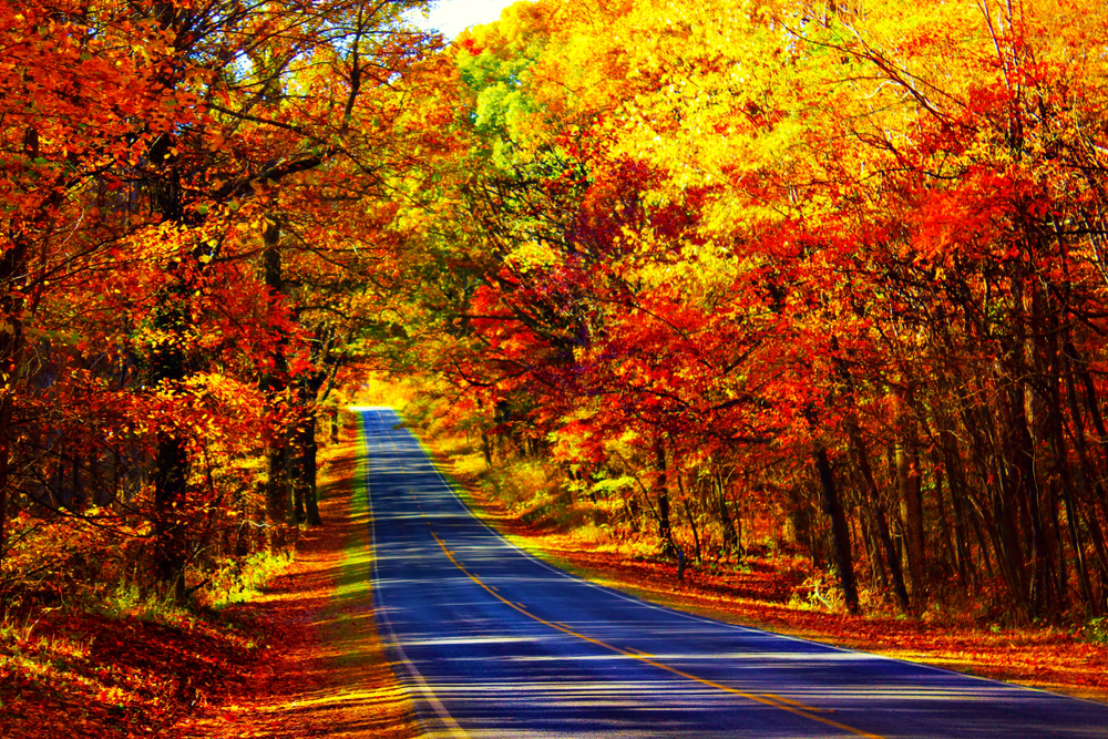 Fall foliage at skyline drive in the south USA