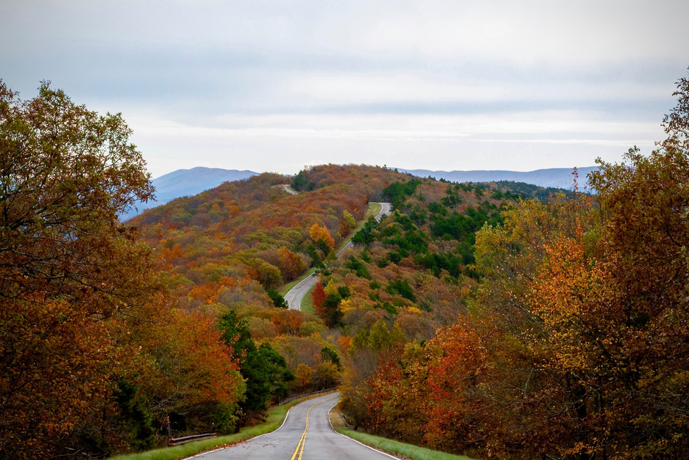 Photo of a curvy road going up a hill surrounded by fall foliage along the Talimena National Scenic Byway during fall in the south