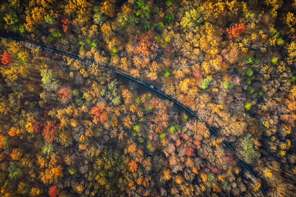 Aerial photo of a car driving down a road surrounded by colorful foliage during fall in the south.