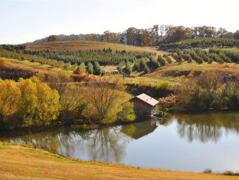 Mercier Orchard in Blue Ridge Georgia on a fall day with lake in the foreground