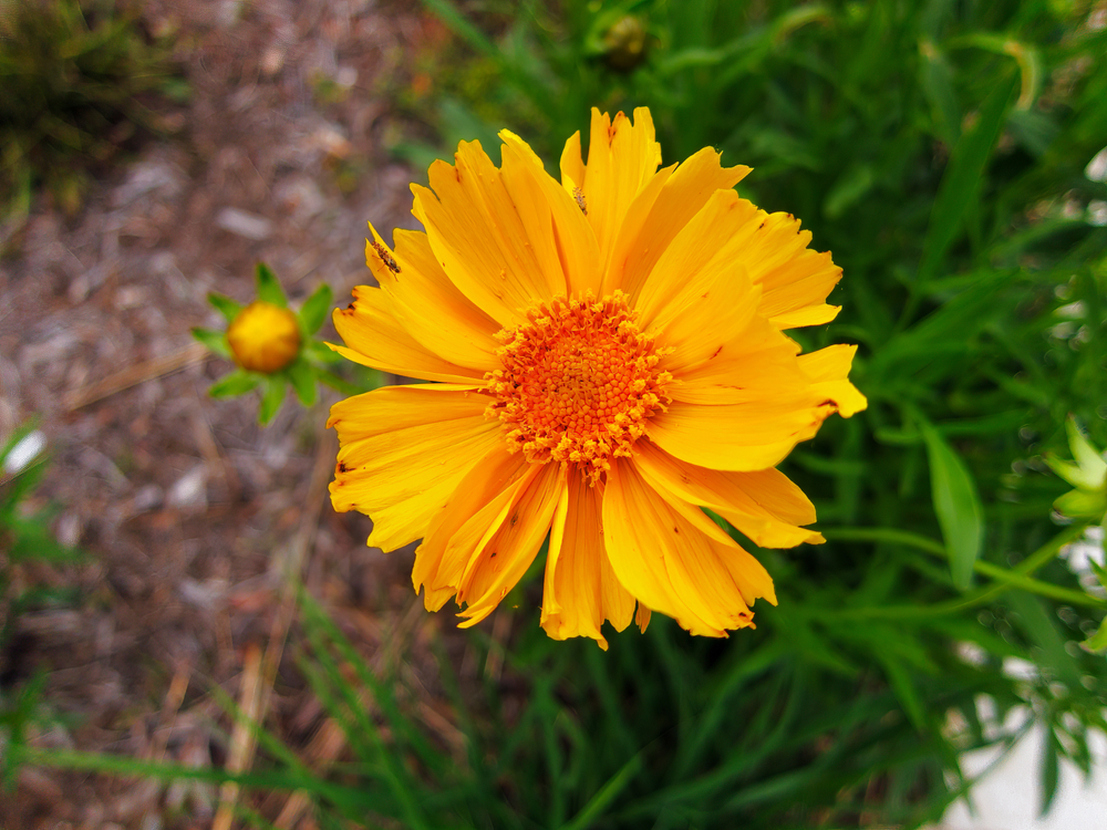 Close-up of a golden flower at Sandy Creek Nature Center, one of the best things to do in Athens.