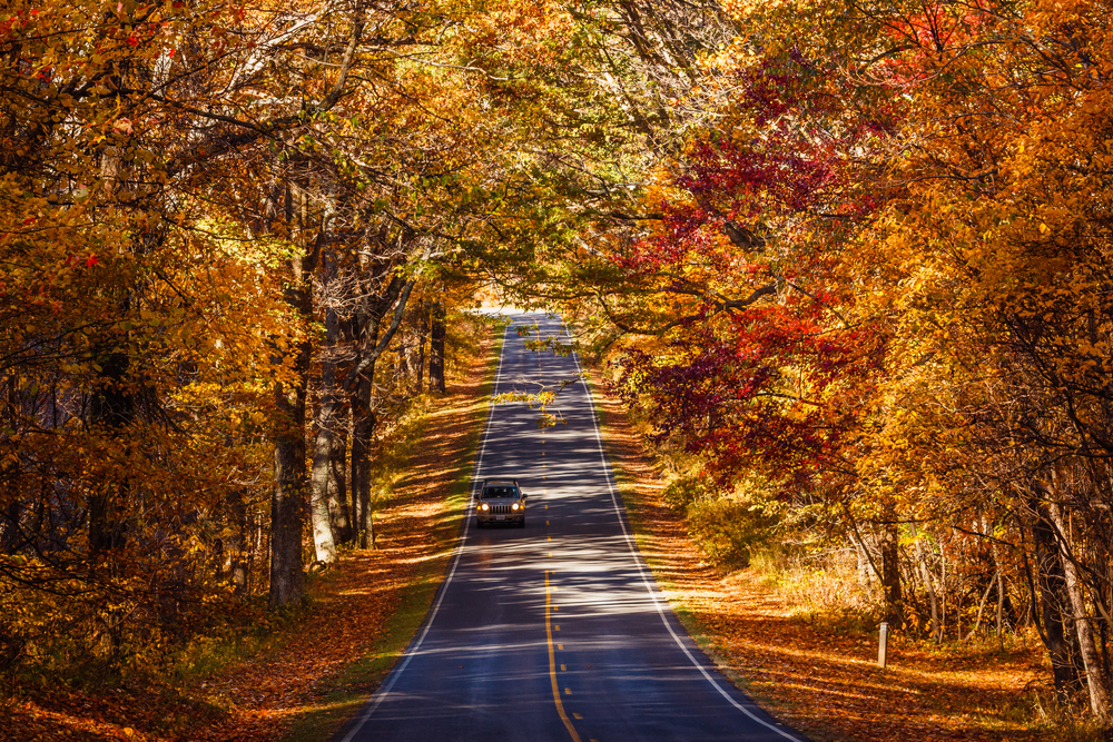 A car driving through a tunnel of fall foliage on Skyline Drive in Shenandoah National Park.