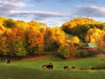 A picture of a farmhouse on a hill surrounded by autumn trees and cows scattered on the land in Boone, North Carolina.