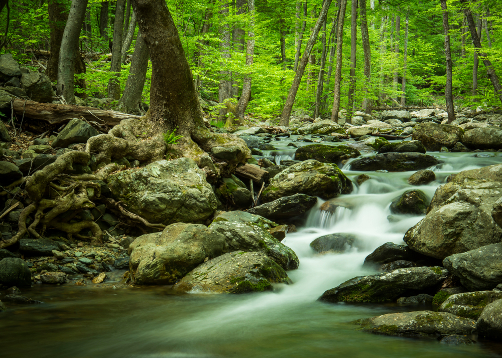 A photo of the rocky White Oak Canyon Waterfall surrounded by green foliage.