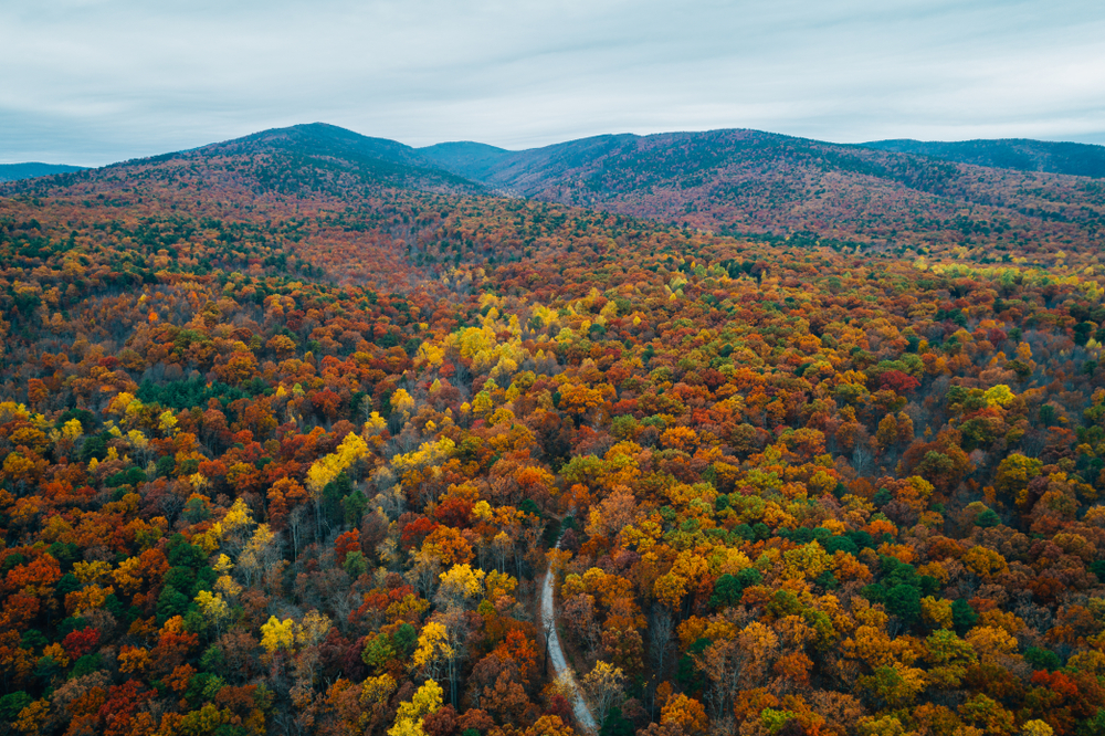 An aerial view of the George Washington National Forest in the Fall. The trees are covered in green, yellow, orange, and red leaves for miles. You can see a road winding through the trees every so often.