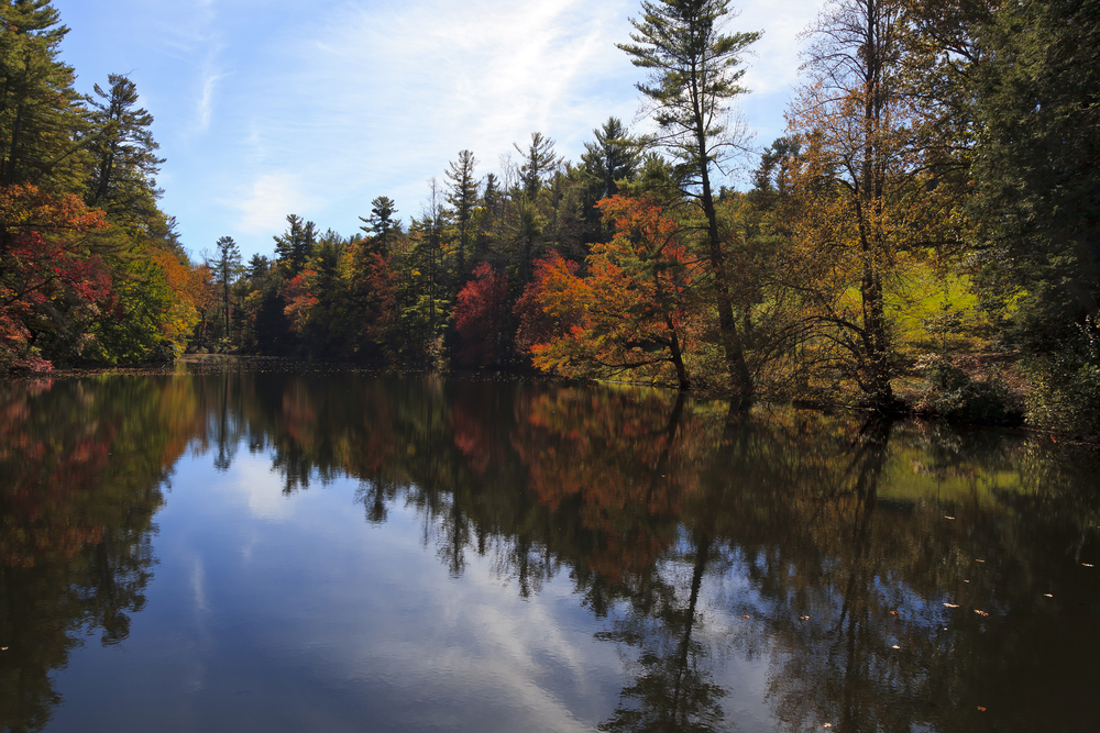 A pond that is surrounded by a dense forest. On the shores of the pond you can see trees with different colored leaves. They are yellow, orange, red, and green. There are also evergreen trees. You can see the trees reflected in the pond water.