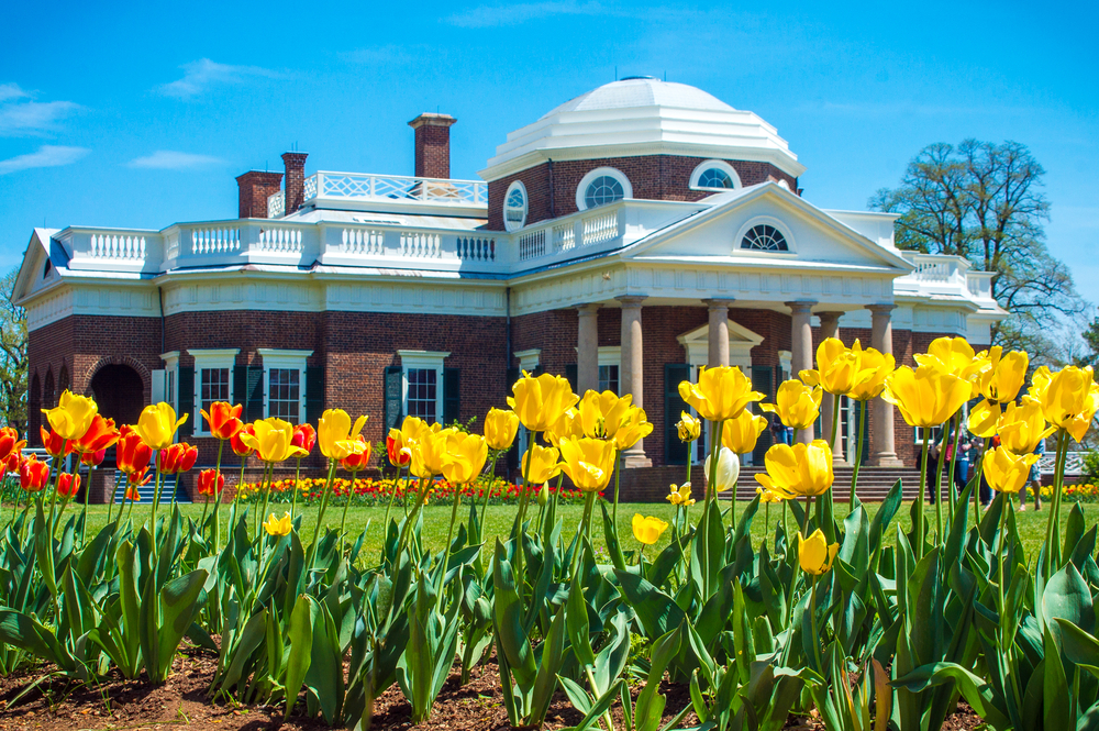 A brick plantation style building that has white trim and a white roof. In front of the house there are yellow, red, and orange tulips planted. The sky is blue. It is Thomas Jefferson's famous Monticello.