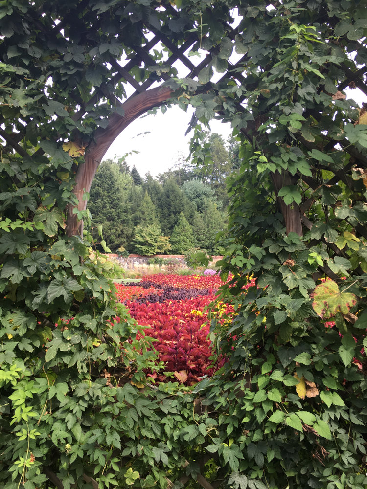 A circular wooden window with an ivy terrace around it. Through the window you can see an elaborate tulip garden. The flowers are red, yellow, purple, and trees behind the walled garden.