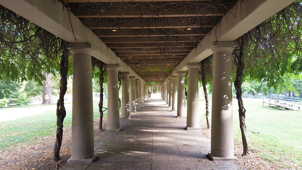 walkway covered with columns on both sides with trees growing over top