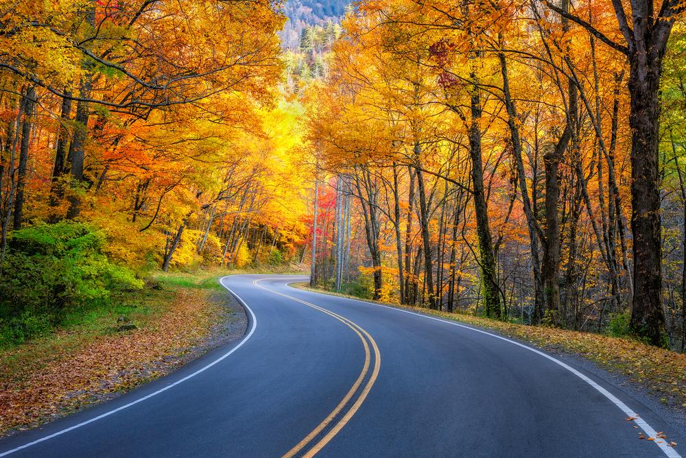 A winding road going through an autumn forest.