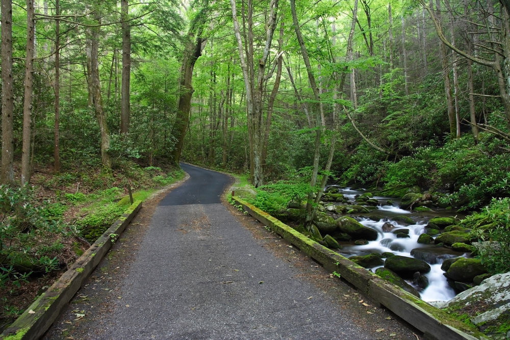 The Roaring Fork Motor Nature Trail going through green trees with a river on the side.