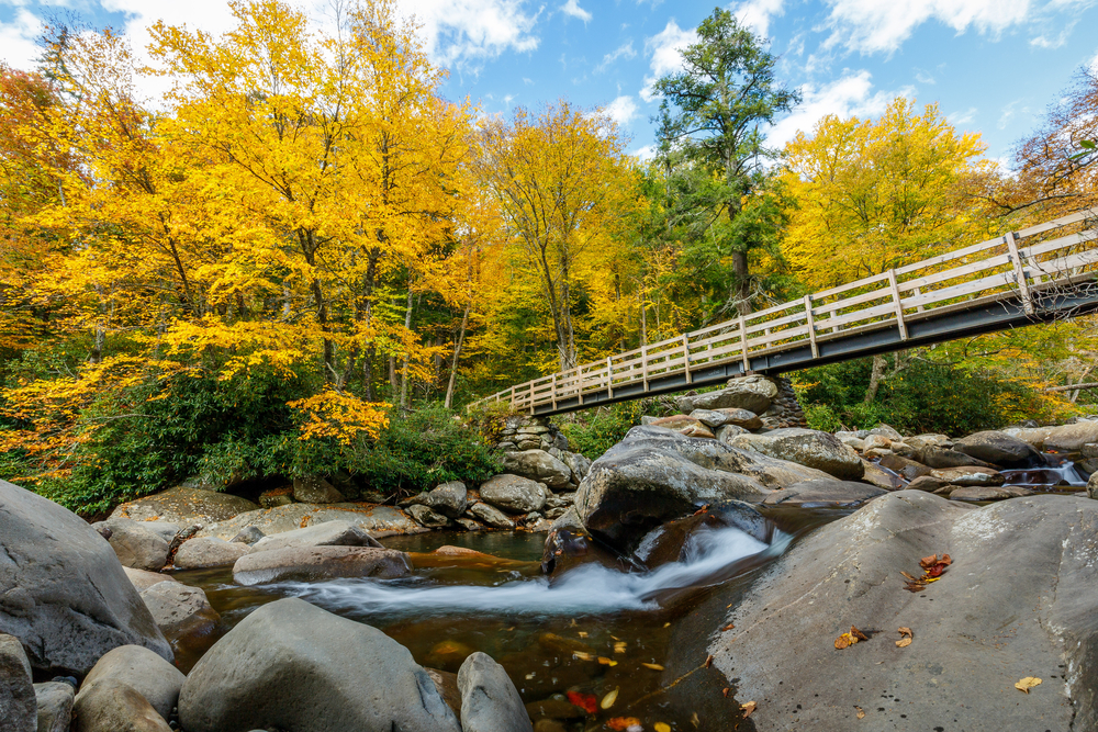 Yellow leaves on trees and a bridge over a river.