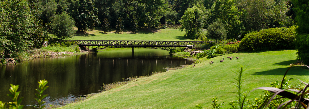 The green grass and ducks near. a-beautiful pond with wooden bridge