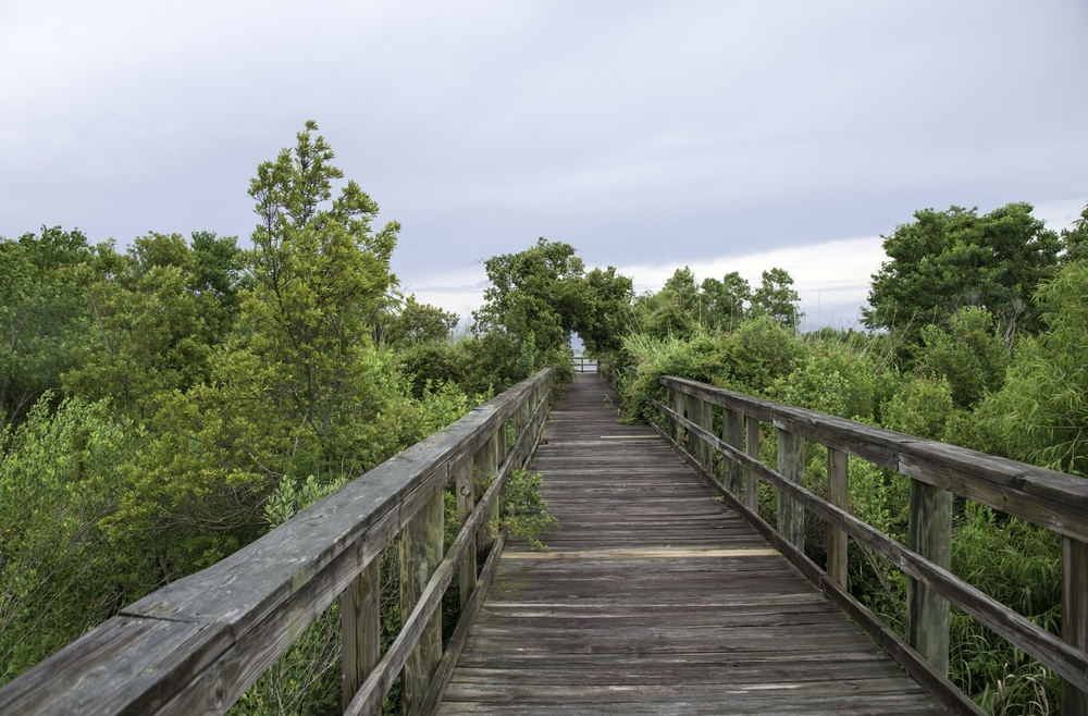 A wooden boardwalk leading thought the trees in Meher state park