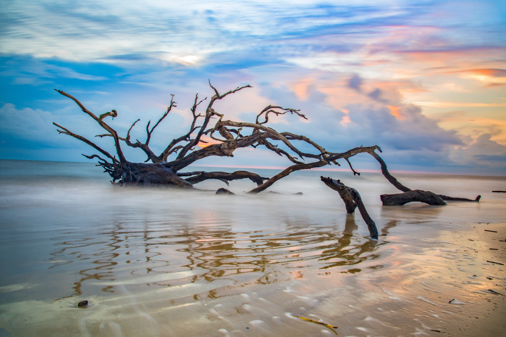 A driftwood tree surrounded by water as it rests on Driftwood Beach, one of the prettiest beaches in Georgia.