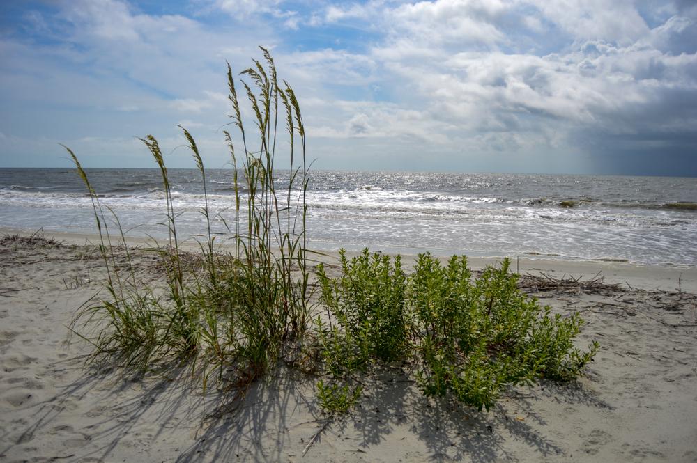 Sun on the sand and vegetation growing along a beach on St Simon's Island in Georgia.