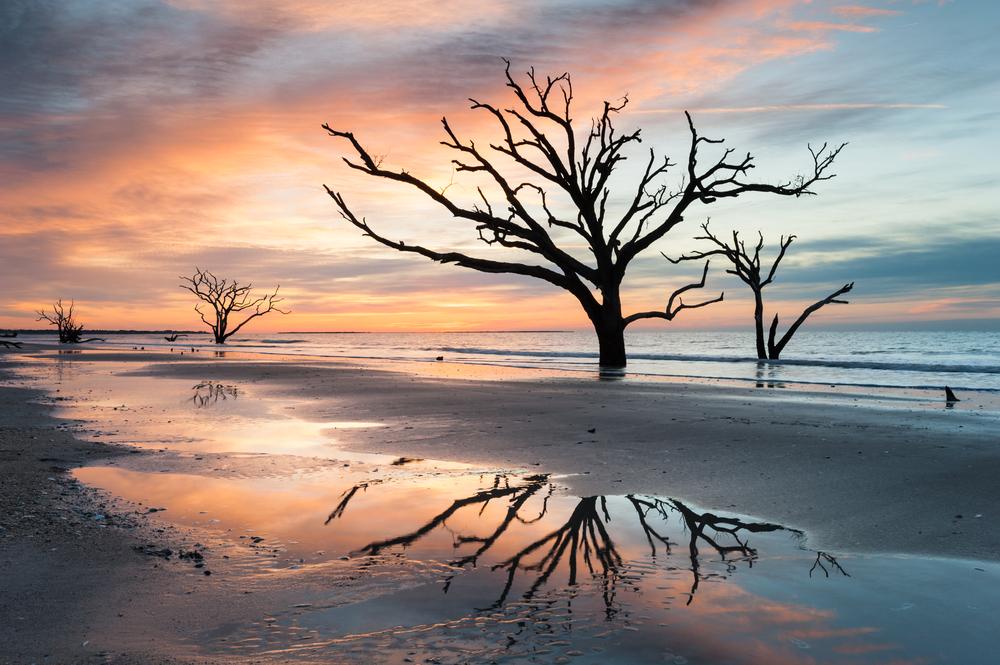 sunset on beach, driftwood and trees dot the beach